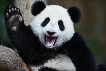 img-panda-1